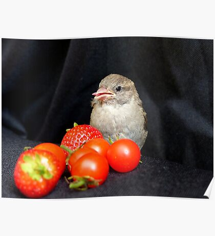 Yum... Rescued Sparrow - NZ Poster