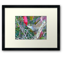 Love Is... Sharing A Teat!! - Silver-Eyes - NZ Framed Print