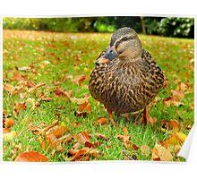 I'm Blending Into Autumn - Mallard Duck Poster