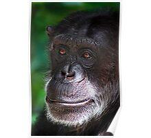 Old Chimp Poster