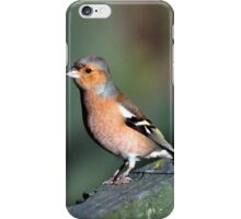 Chaffinch  iPhone Case/Skin