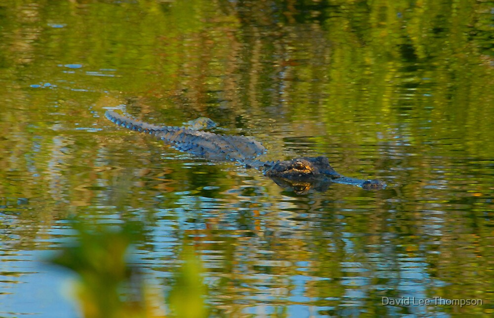 """""""Cruising the Glades"""" by David Lee Thompson"""