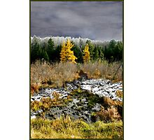 A Golden Moment in the Larch Bog Photographic Print