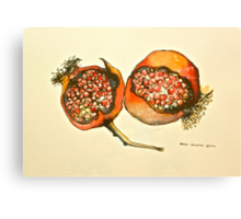 Pomegranate. Pen and wash 2012Ⓒ  Canvas Print