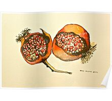 Pomegranate. Pen and wash 2012Ⓒ  Poster