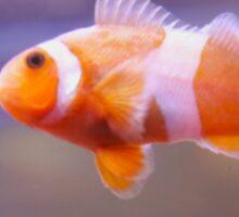 Clownfish is No Joke Sticker