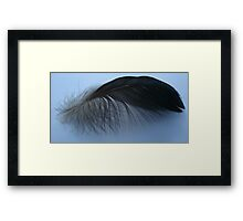 Muscovy feather Framed Print