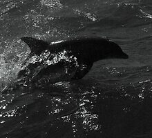 Dolphin, Black and White by Troy Spencer