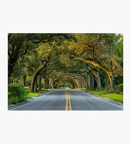 12th Avenue Tree Archway Photographic Print