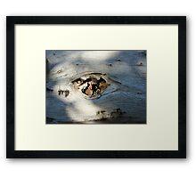 Fish Fillet Framed Print