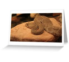 Desert Snake Greeting Card