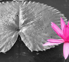 lily pad by Courtney Goddard