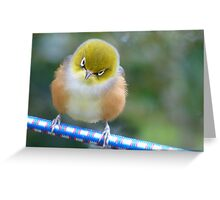 A Silver Halo Helps The Contemplation Process!!! - Silver-Eyes - NZ Greeting Card