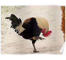 Yikes... I Think My Foot Is Frozen... - Gold-Duckwing Rooster - NZ Poster