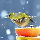 I'll Catch A Snowflake...That Will Teach It A Lesson -Silver-Eye - NZ by AndreaEL