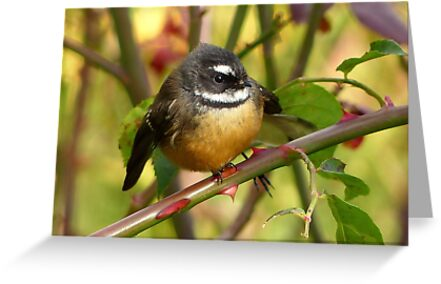 A Life With Love Will Have Some Thorns - Fantail - NZ by AndreaEL