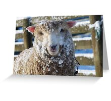 I'm Feeling A Little Sheepish In The Snow - NZ Greeting Card