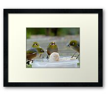 YUM...yum...Yummy... - Silver-Eyes - NZ Framed Print