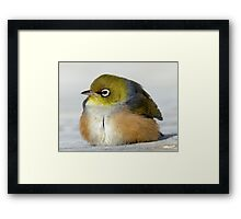 Ahh...Don't You Just Love The Sun? - Silver-Eye - NZ Framed Print