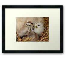 I Want The Middle Bed!! - Roodles - NZ Framed Print