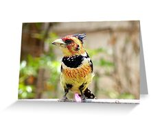 I'm Unmistakeable - Crested Barbet - South Africa Greeting Card