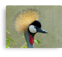 Up and Coming 2014 Hair Style - Grey-Crowned Crane - South Africa Canvas Print