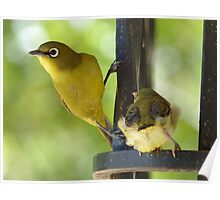 This Is My Child - Cape White Eye - South Africa Poster