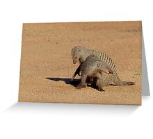 Aww... Aren't You Going To Share That!! - Banded Mongoose - Mabalingwe Nature Reserve Greeting Card
