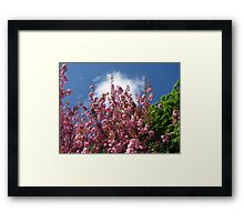 Blue Sky and Pink Blossoms Framed Print