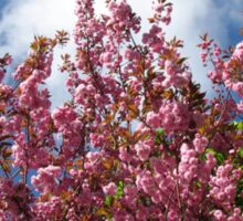 Blue Sky and Pink Blossoms Sticker