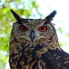 I'm Silent... But Deadly!- Spotted-Eagle Owl - SA by AndreaEL
