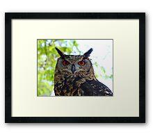 I'm Silent... But Deadly!- Spotted-Eagle Owl - SA Framed Print