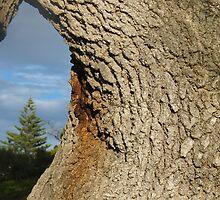 Tree View by Jasenat