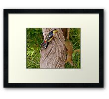 OUT Out!!... This Is My Cavety!...Crested Barbet & The Squirrell Framed Print