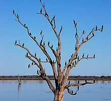 Tree of Life. Murray River, S.A by patapping
