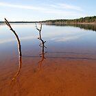 Loch Morlich, Scotland by Julie M Gibson