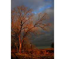 After The Fire - Still Standing Photographic Print