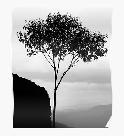 Gumtree silhouette, Blue Mountains Poster