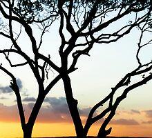 Tree silhouette, Fraser Island by JoshuaStanley