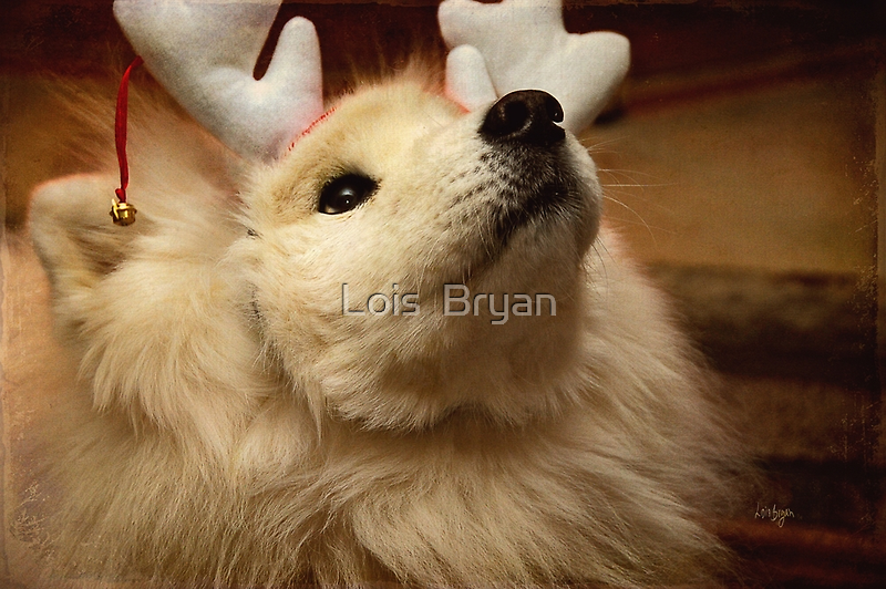 Have I Been A Good Doggie? by Lois  Bryan