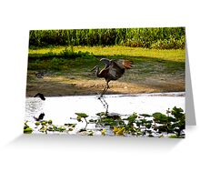 Sandhill's  Paternal Protection Greeting Card