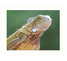 Iguana Portrait Art Print