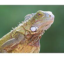 Iguana Portrait Photographic Print