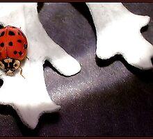 LIL' LADY by webdog