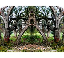 A REALLY Live  Oak Photographic Print