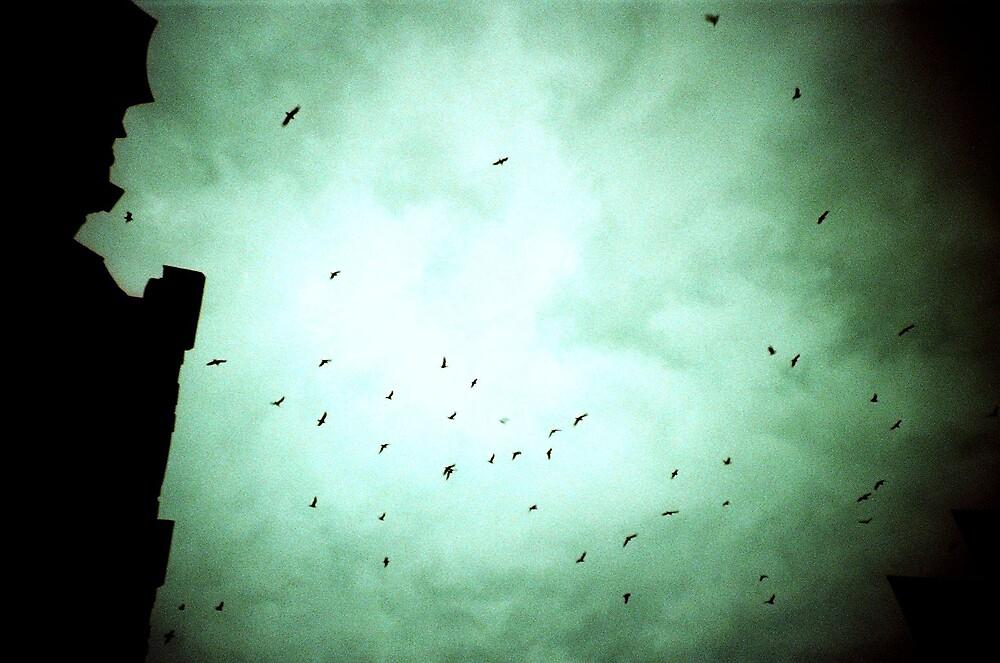 Birds by presty