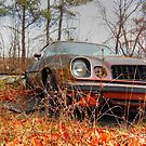 Resting Place For A Z 28 by James Brotherton