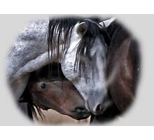 Wild Mustangs in Love Photographic Print