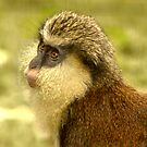 Mona Monkey by Lisa G. Putman