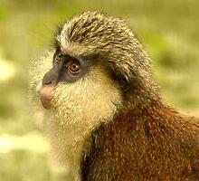 Mona Monkey by Lisa G. Putman